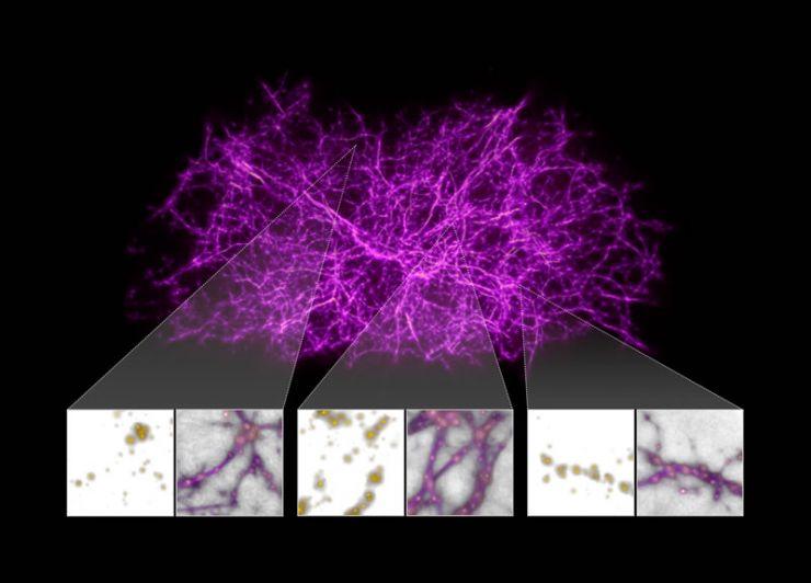 El Moho del Limo Ayuda a Mapear la Materia Oscura que Mantiene Unido el Universo